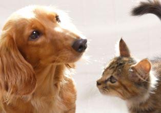 2040年、地球上から犬・猫が消える