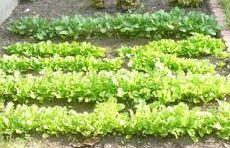 「放射能に不安」「家庭菜園や園芸の趣味奪われた」 福島県民が東電に精神的な賠償求め裁判