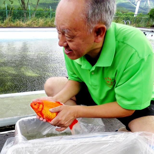 熊本地震 金魚