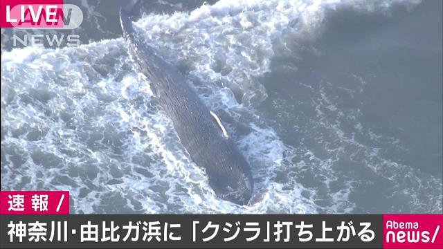 鎌倉市 クジラ